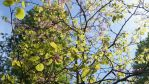 A bright summers day, a tree in bloom. by Pixie-Aztechia