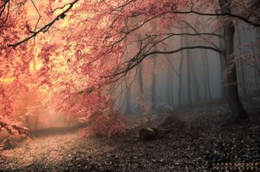 -Revealing truth- by Janek-Sedlar