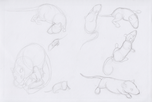 Rat Sketches by pandemoniumfire