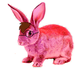 Jared the Rabbit IRL by Jared-The-Rabbit