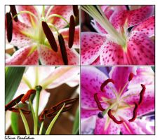 lilium collage by Deni1Kitty