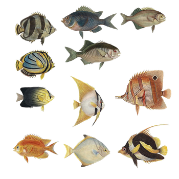 Variety Of Fishes PNG by chaseandlinda