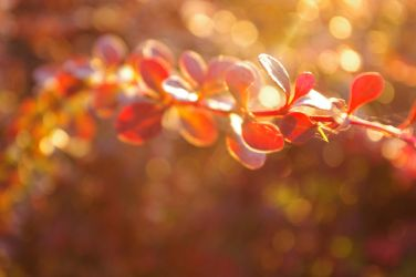 Bokeh leaves by skarlett-rosetta