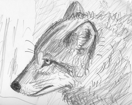 Rough Wolf Sketch by monoirre