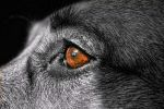Doggy Detail by Mriehle1