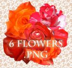 6 flowers PNG format by ForestGirl