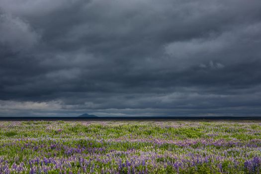 Iceland - As far as the eye can see by CID228