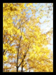 Autumn Leaves by Colin-Moore