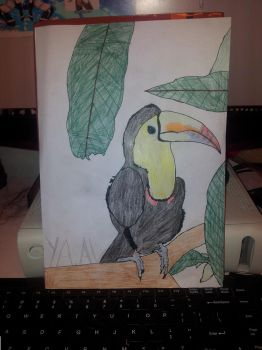 Toucan Drawing by ConnorSparda