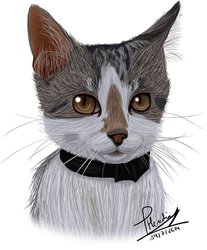Drawing my cat by CaptainZelda07