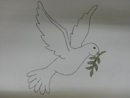 Dove Drawing by jcpag2010