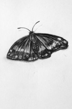 Black and White Butterfly by CalmGhosts