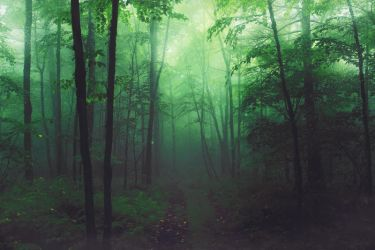 STOCK : ENCHANTED FOREST : PRE-MADE BACKGROUND by thehouseofphotoshop