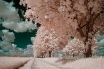 Peach trees by DimensionSeven