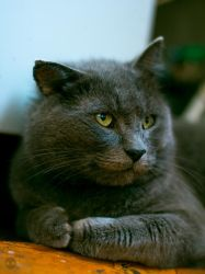My old cat by Parasenak