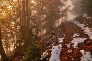 Foggy Autumn Forest by Burtn