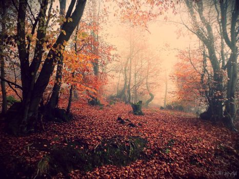Fairy Wood I by Weissglut