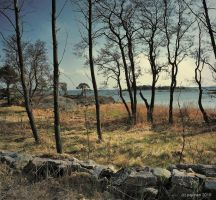 Stone wall, trees and sea by Pajunen