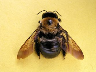 Bumble Bee by Eden-stock