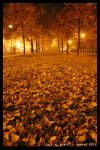 Fall At Night by zerous