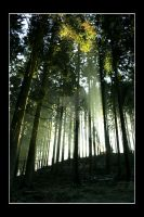Canopy light by Haati-and-Mousa