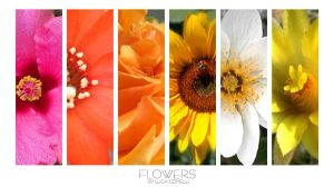 Flowers by Luca Comelli by Comel88