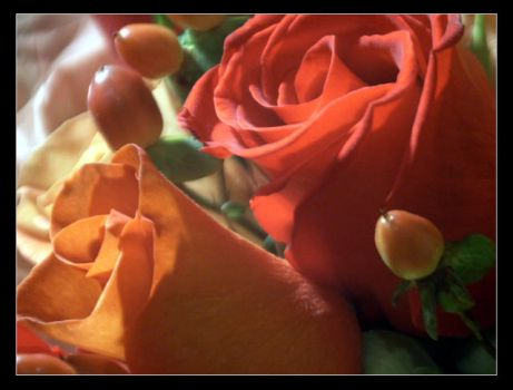 Rose Close Up 3 by docimastic