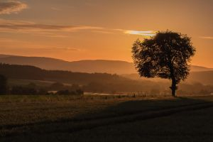 Golden Morning by M-M-F