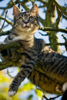 Cat In A Tree by darkcalypso