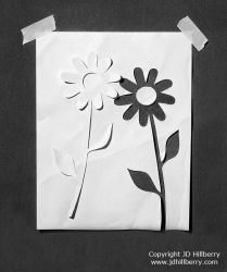 Paper Daisies by JD-Hillberry