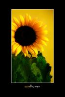 Sunflower by Derfel