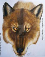 Wolf drawing. by TheKarelia