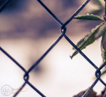 Fenced In by TRE2Photo-n-Design