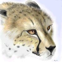 cheetah portrait by wildtoele