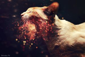 Cat On Fire by ShinobuFX