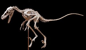 bambiraptor step10 by hannay1982