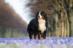 Colourful by Tiefenschaerfe