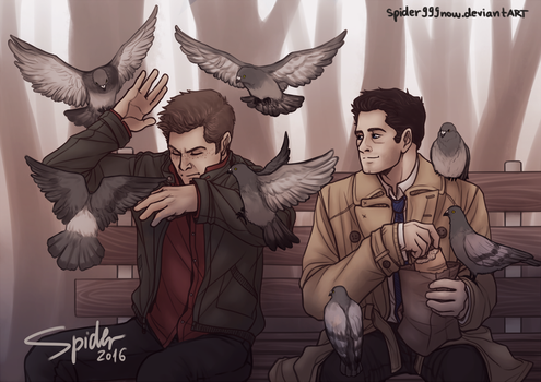 Pigeons by spider999now