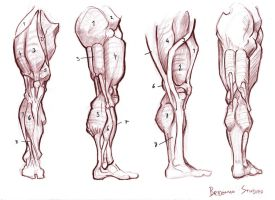 Anatomy Studies 013 by Gyzmotnik