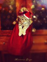 Boo.. Am ur Xmas present.. by blondepassion