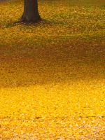 COLORS OF YELLOW by JabLab by JabLab