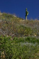 cactus 2 by luv2danz