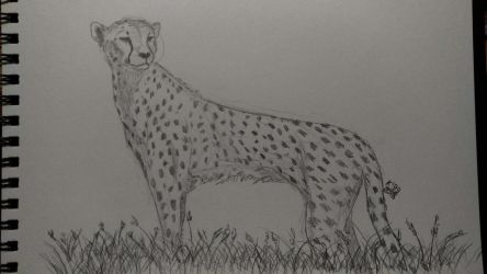 Monday cheetah by kosko99