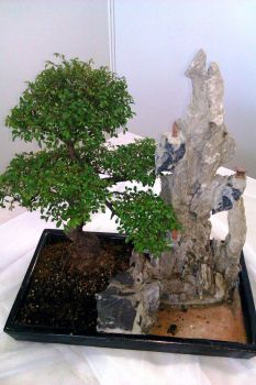 Bonsai by zutto6669