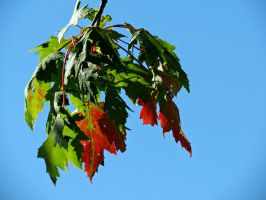Change of Season by Michies-Photographyy