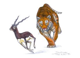 Blackbuck chased by a Bengal tiger by Gredinia