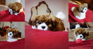 Poseable Havanese Puppy by IllusionTree