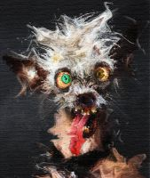 Crazy-crazy-Dog - bad day 4 ernie by jaidaksghost