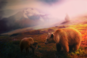 The Bear by Hioderro