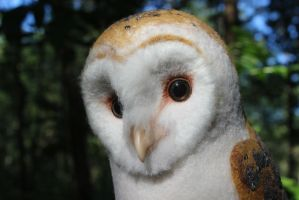 Young barn owl (face) by Sillykoshka